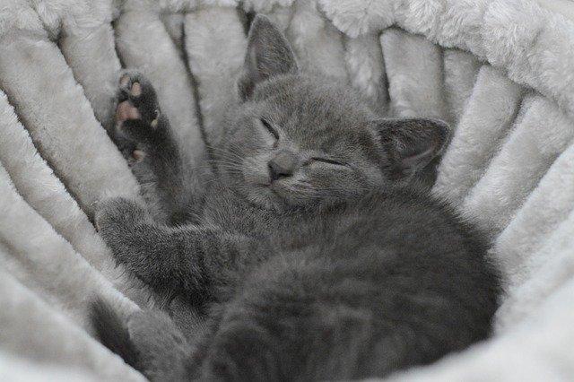 kočka v pelíšku